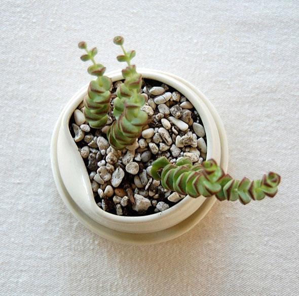 Small-Pot-top