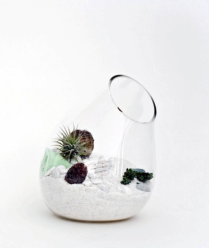 litill mjog terrariums