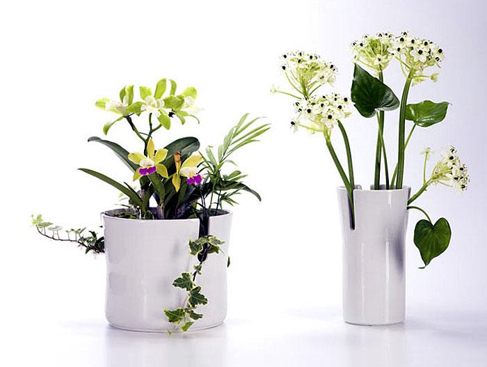 snow blossom vases