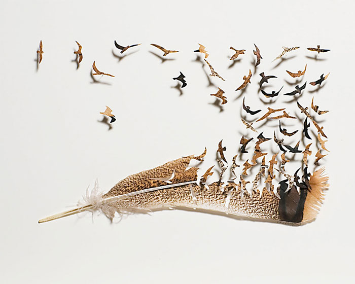 feathers-art-3