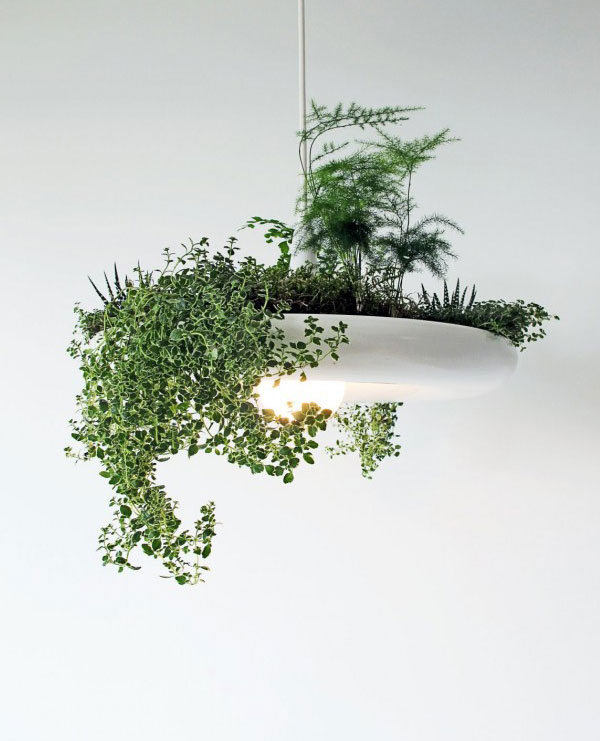 organic-light