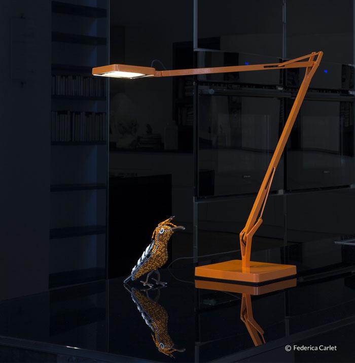 kelvin-orange-bird