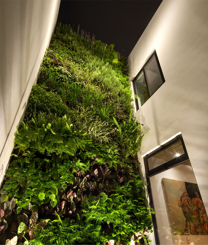 mexican-house-green-wall