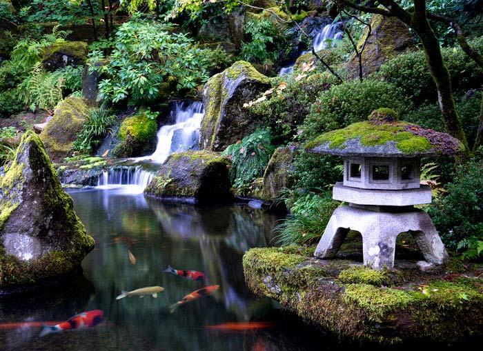 koi fish pond garden stone lantern