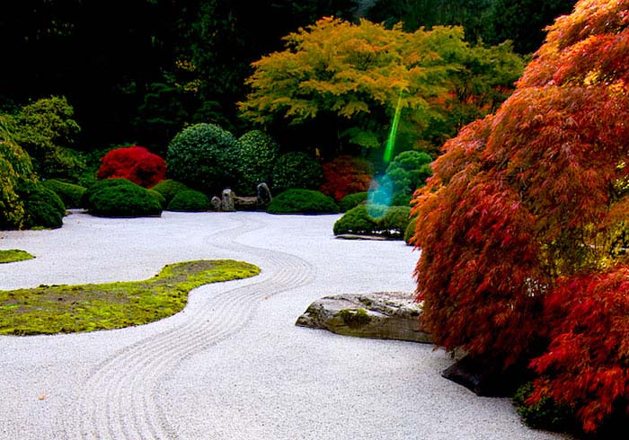 red maple zen garden tree