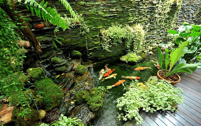 small asian garden koi fish pond