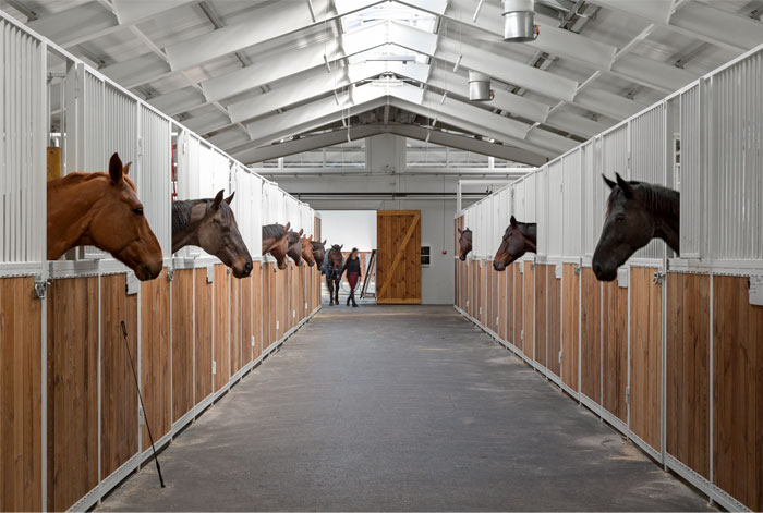 drozdov partners project horse club 2
